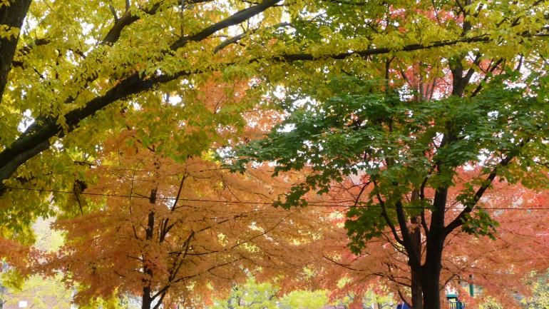 autumn on greenview