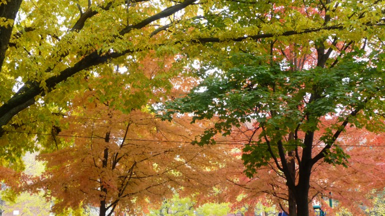 autumn on greenview